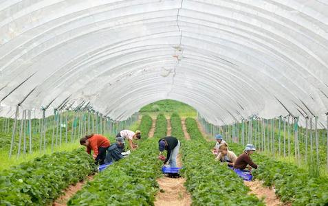 Farming Post-COVID19